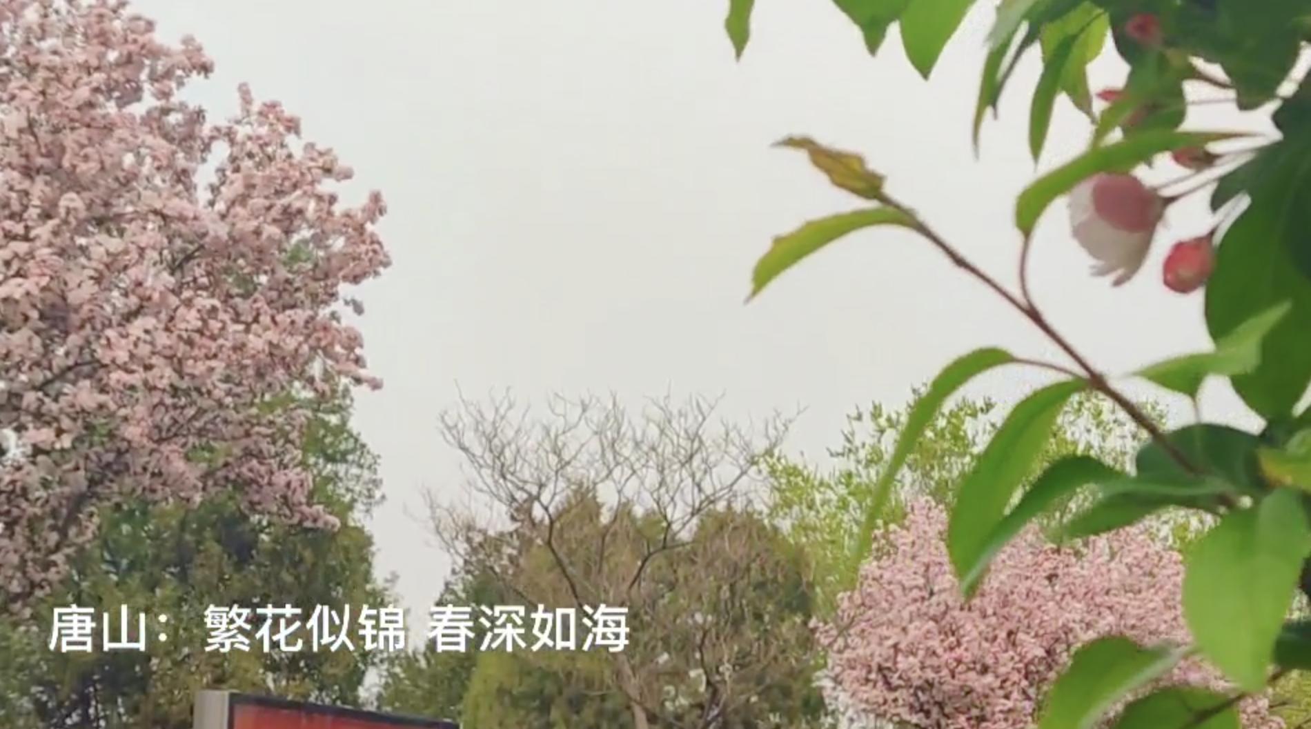 唐山:繁花似锦 春深如海