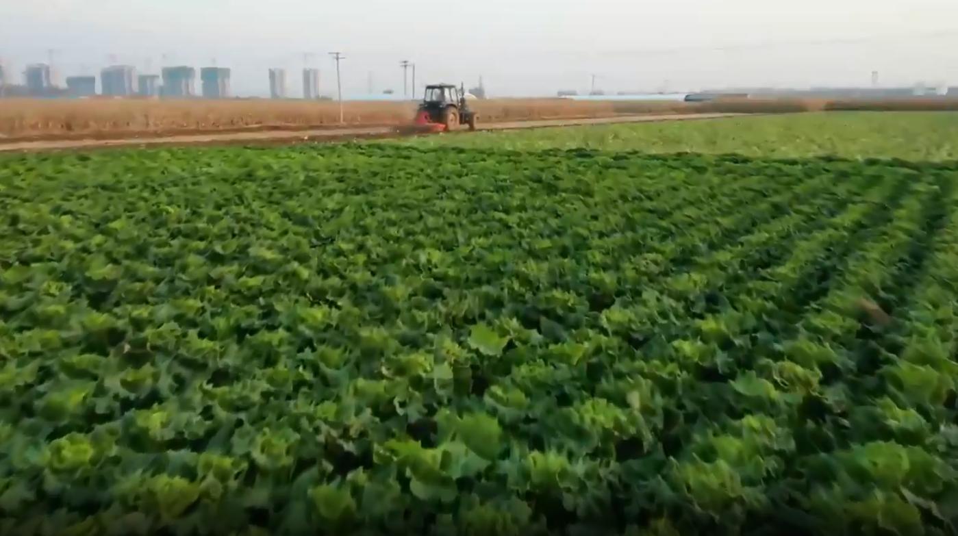 新华社聚焦丨玉田:蔬菜产业助农增收致富